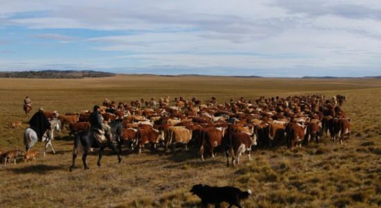 La Patagonie Argentine : l'un des espaces les plus fascinants d'Amérique du Sud