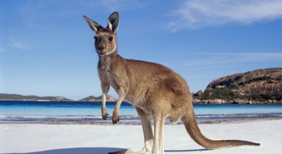 L'Australie, le pays des kangourous