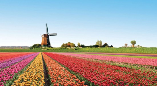 Les champs de tulipes en Pays Bas, un champ haut en couleur