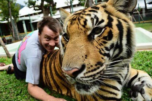 Tiger Kingdom ouvre à Phuket