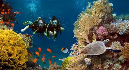 Les plus beaux spots de plongée aux Antilles