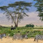 Faire un safari en Tanzanie : une bonne idée ?